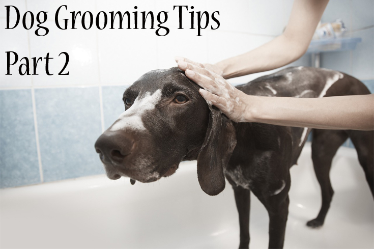 dog grooming tips pt2