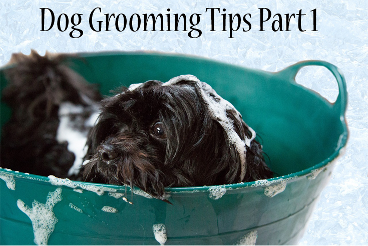 Dog grooming tips pt 1