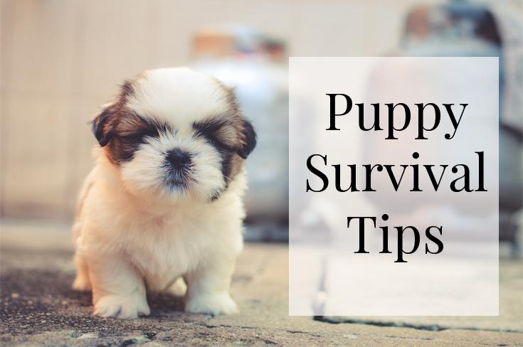 puppy survival tips