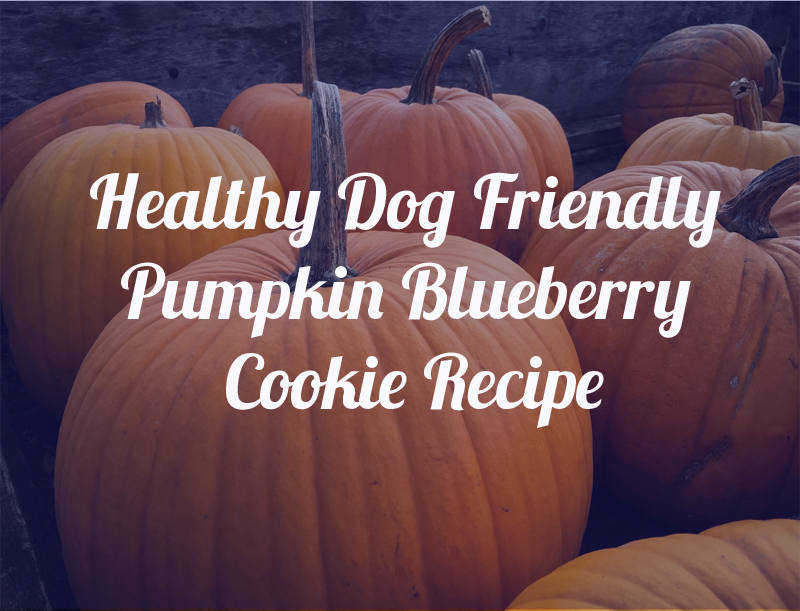 blueberry pumpkin dog cookies