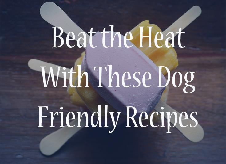 summer dog recipes