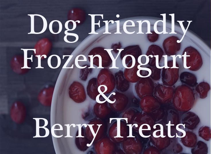 Frozen Yogurt Treat for Dogs