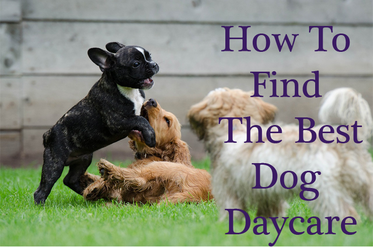 How to Find the Best Dog Daycare