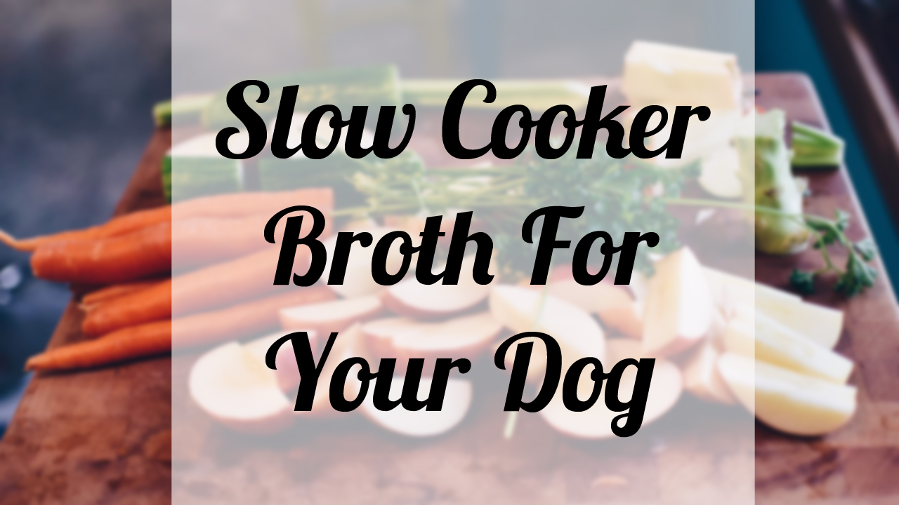Slow Cooker Broth For Your Dog