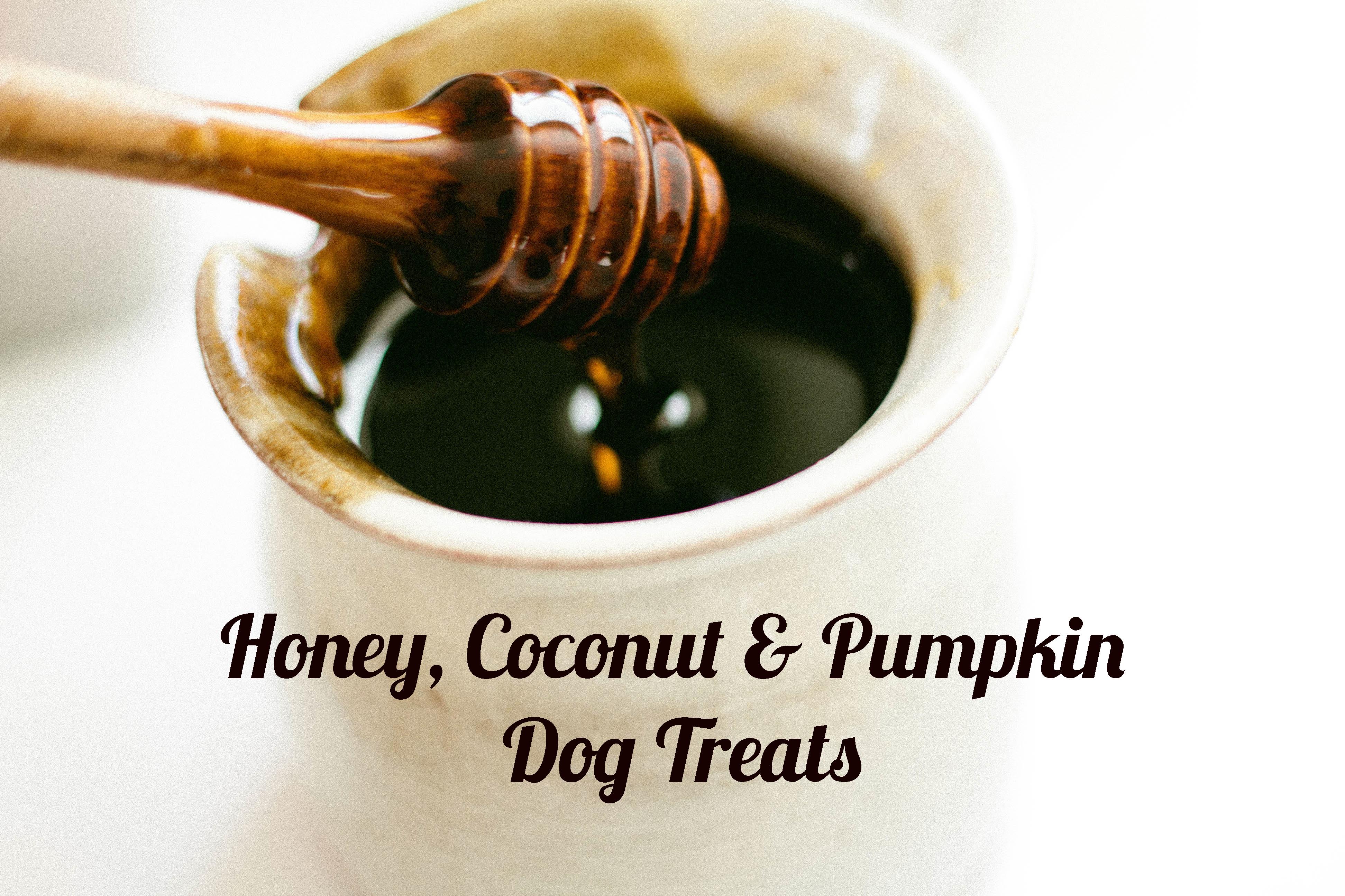 Honey Coconut Pumpkin Dog Treats