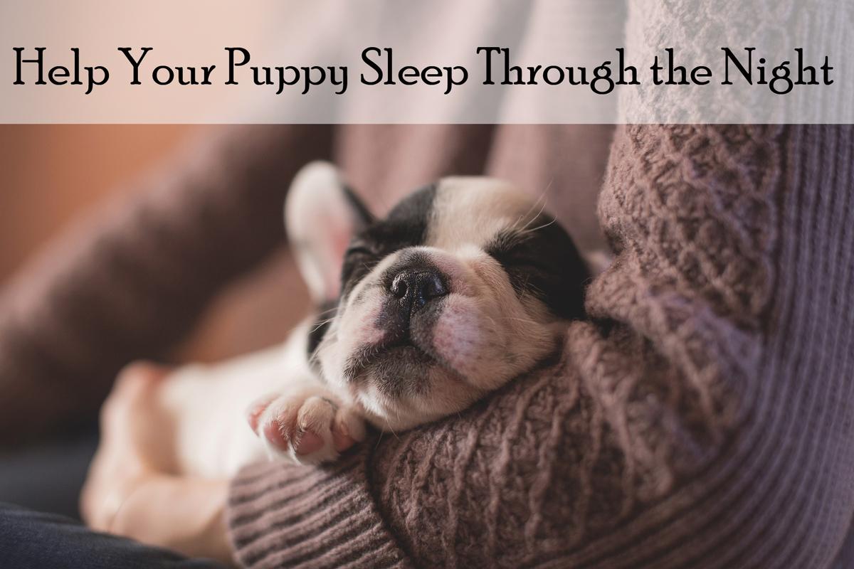 Why Do Dogs Bark While Sleeping
