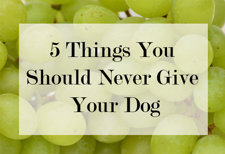 5 things you should never give your dog