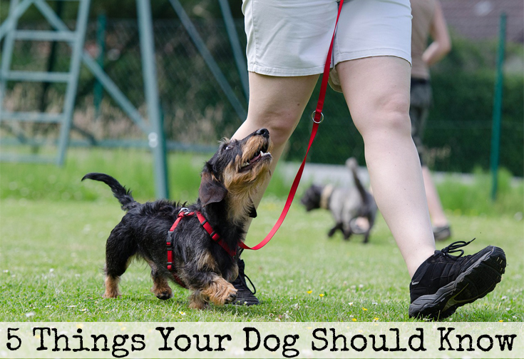 5 things your dog should know