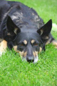 dog-164107_1280