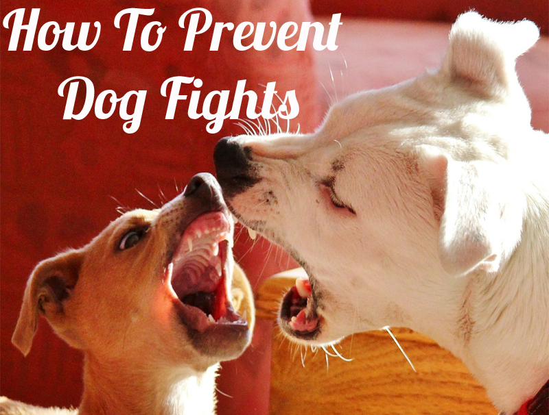 prevent dog fights