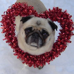 Photo: Valentine Pug