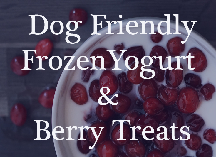 Frozen Yogurt Treat for Dogs