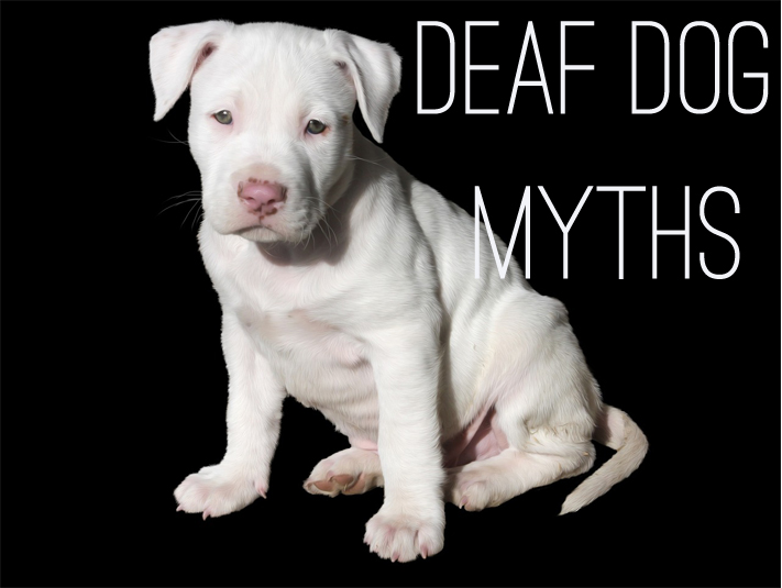 deaf dog myths
