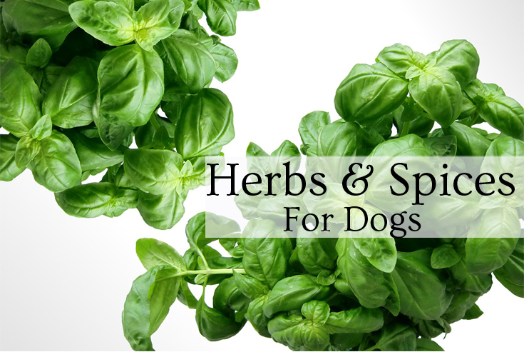 herbs and spices for dogs