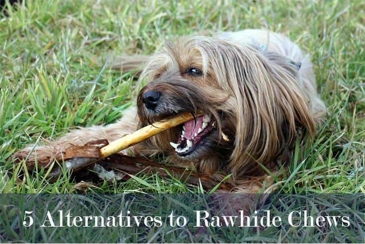 alternativechews