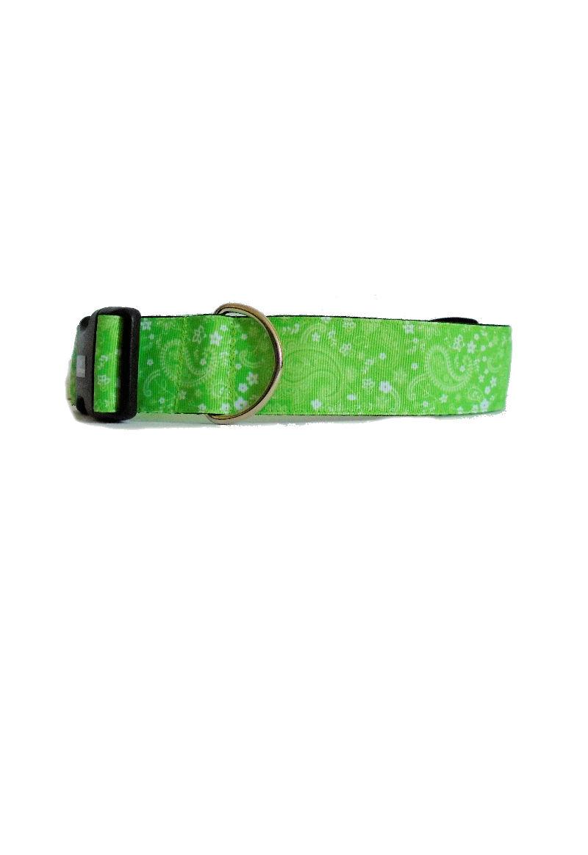 green paisley collar