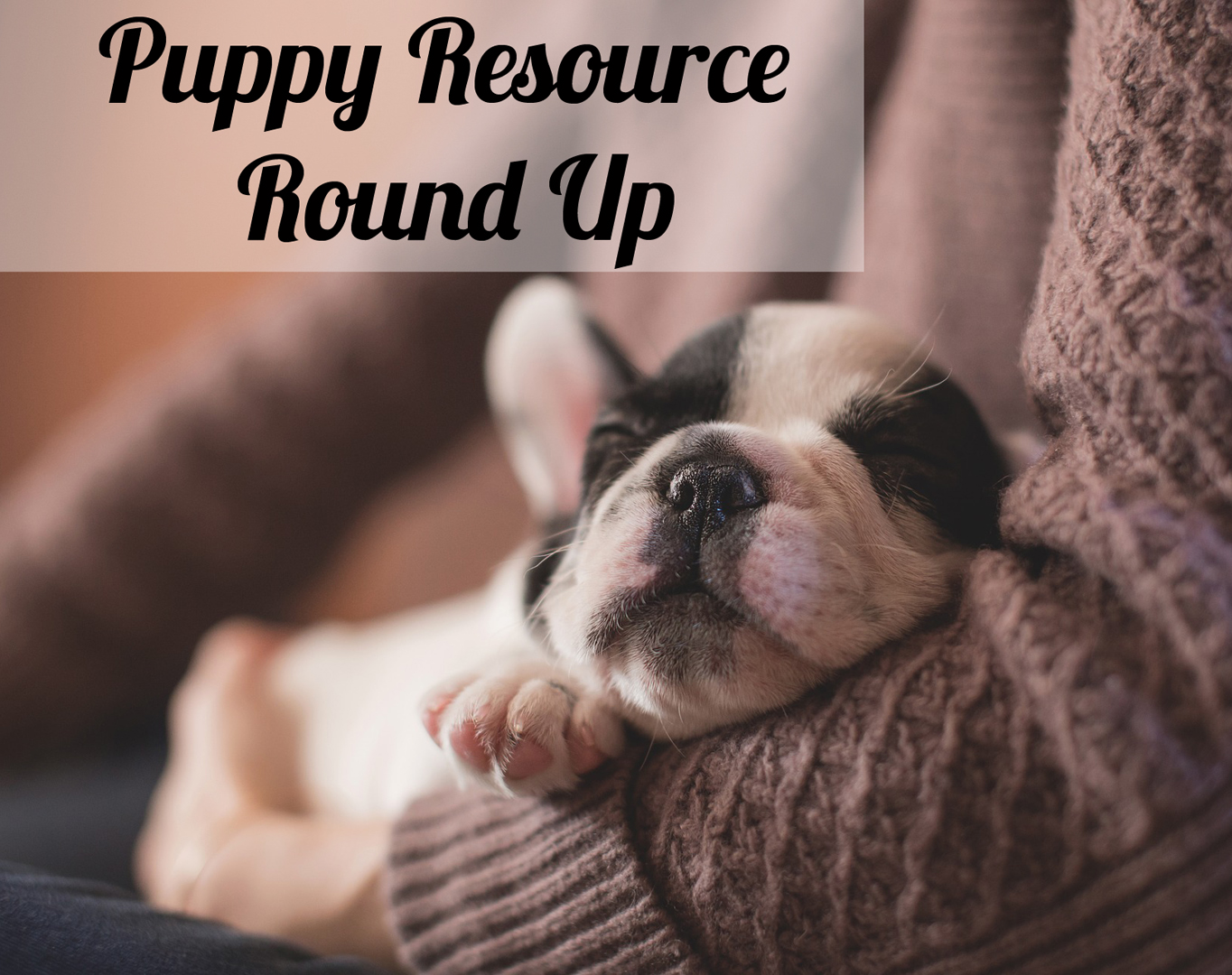 resources to help you survive puppyhood